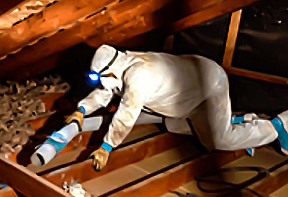project of crawl space insulation removal