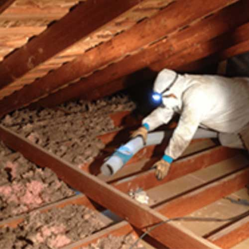 Attic cleaning crawl space